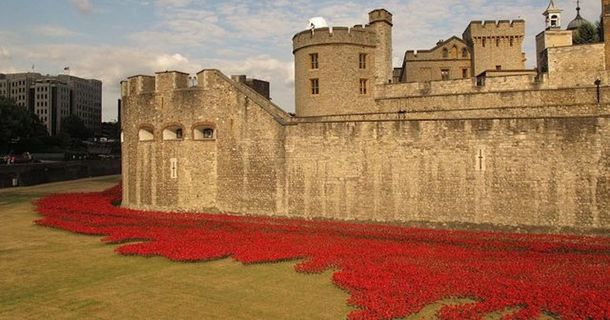These Flowers Commemorate a Terrible Past, Let Their Image Remind Us of the Cost of War